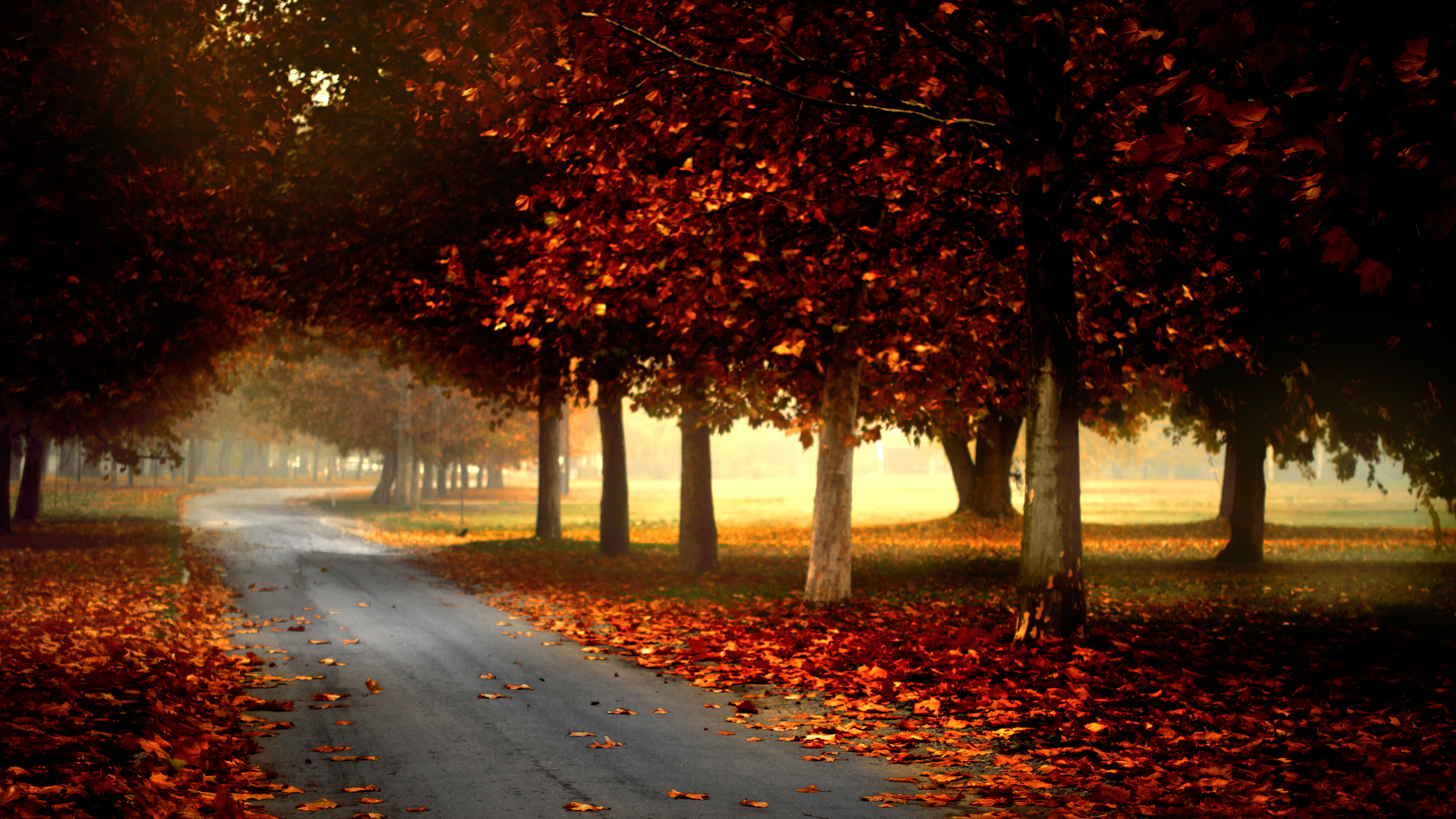 Fall Hd Wallpaper Background Image 2560x1440 Id 180803 Wallpaper Abyss