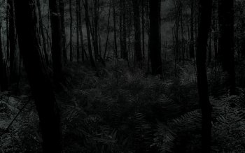 Mörk - Skog Wallpapers and Backgrounds ID : 180291