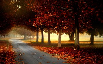 Photography - Autumn Wallpapers and Backgrounds ID : 180803