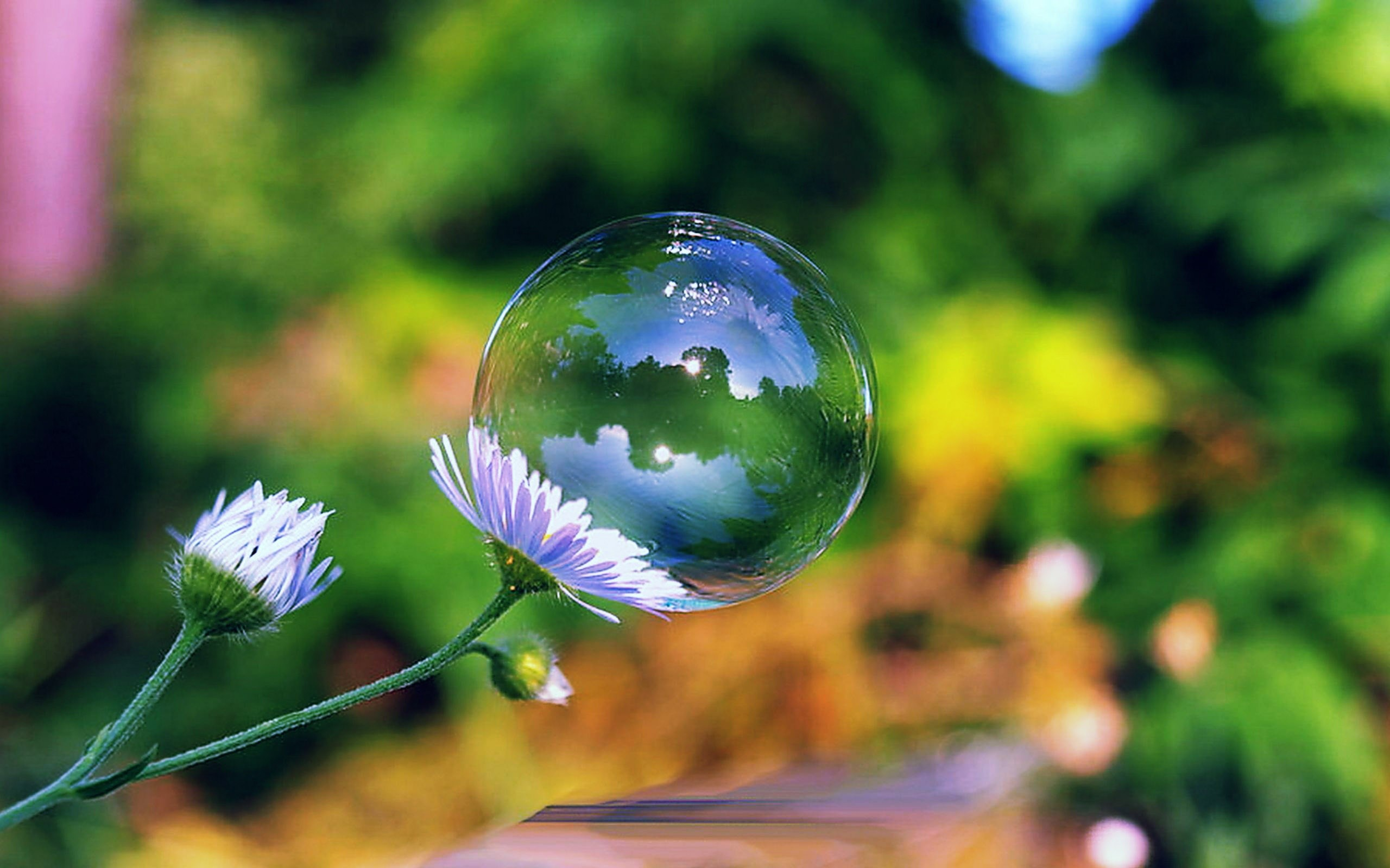 77 bubble hd wallpapers | background images - wallpaper abyss