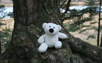 Man Made - Stuffed Animal Wallpapers and Backgrounds ID : 188211
