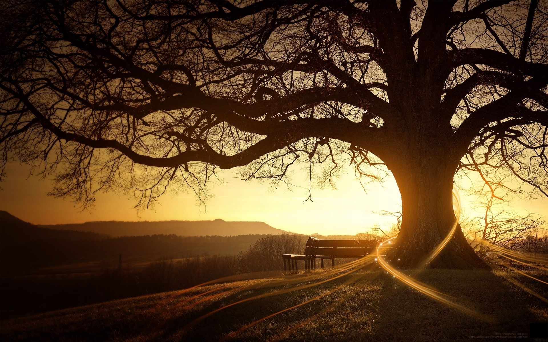 Photography - Manipulation  Sunset Earth Tree Bench Wallpaper