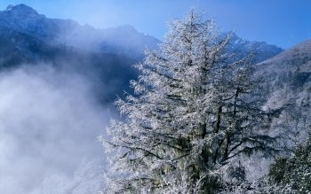 Earth - Winter Wallpapers and Backgrounds ID : 189101