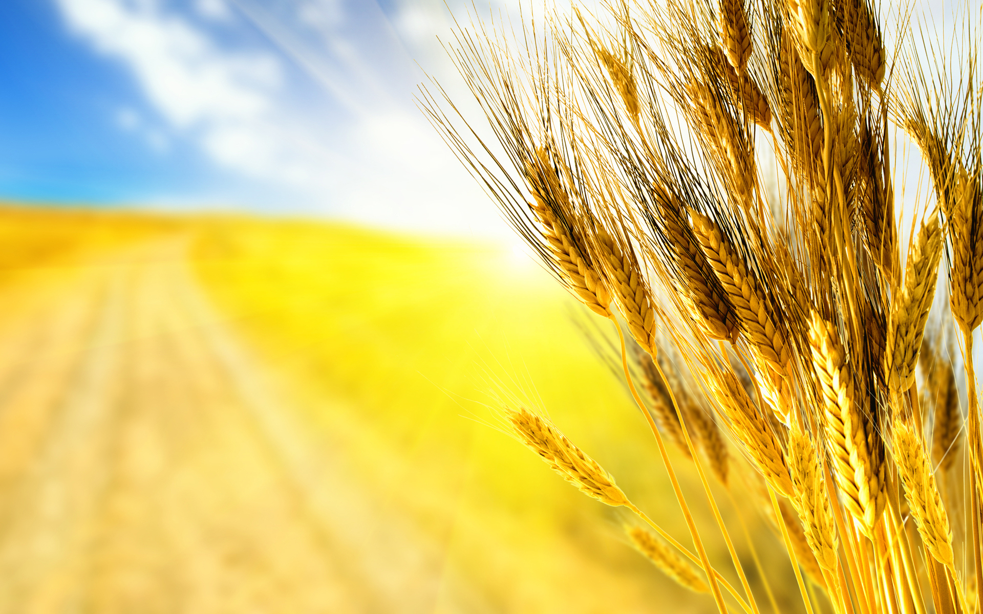 208 Wheat Wallpapers | Wheat Backgrounds Page 4