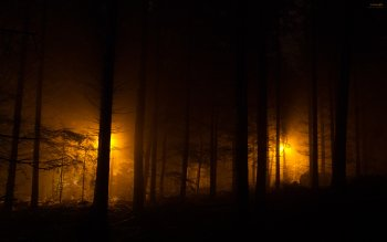 Dark - Forest Wallpapers and Backgrounds ID : 195493