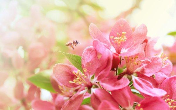 Earth Flower Flowers Bee HD Wallpaper   Background Image