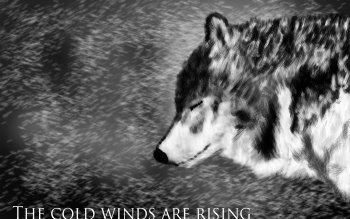 Tier - Wolf Wallpapers and Backgrounds ID : 200861