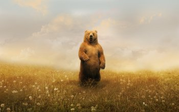 Animal - Bear Wallpapers and Backgrounds ID : 207881