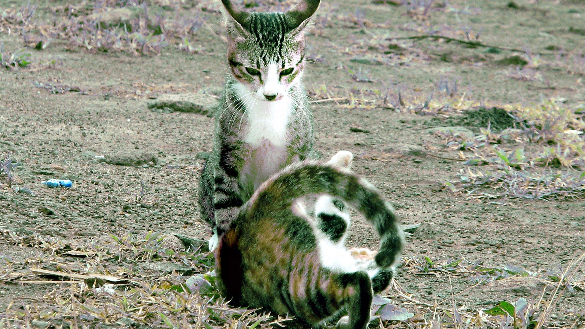 Animali - Gatto  Sfondo