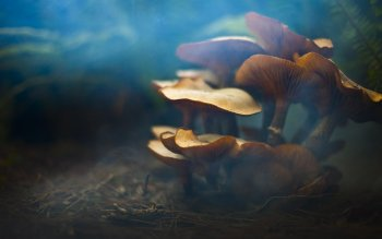 Erde - Pilz Wallpapers and Backgrounds ID : 211671