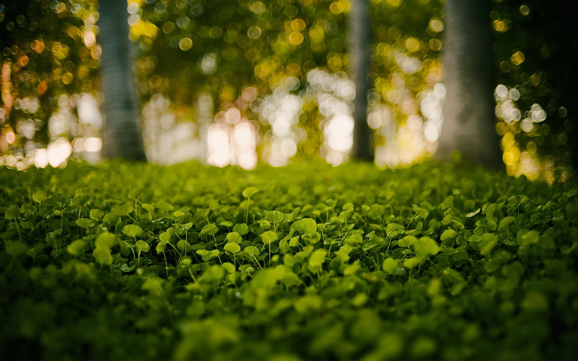 Earth - Plant  Wallpaper
