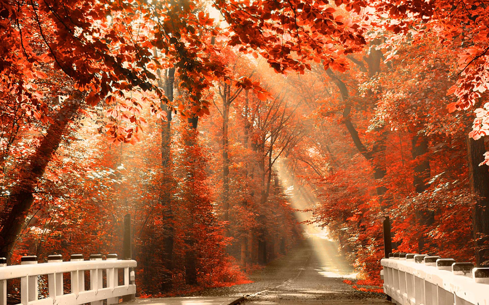 Pintoresco full hd fondo de pantalla and fondo de - Descargar autumn leaves ...