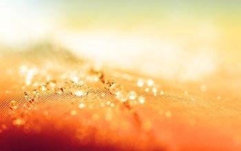 HD Wallpaper | Background ID:217861