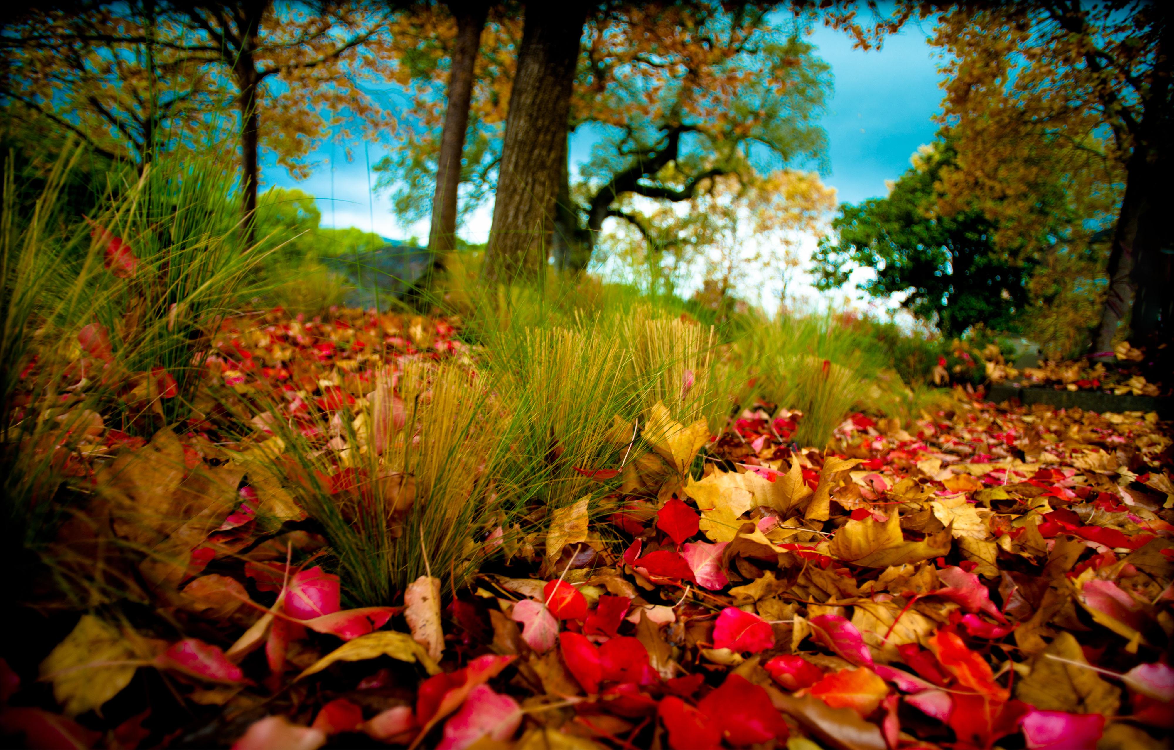 Photography - Fall  Wallpaper