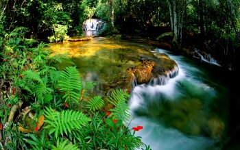 Tierra - Jungle Wallpapers and Backgrounds ID : 233601