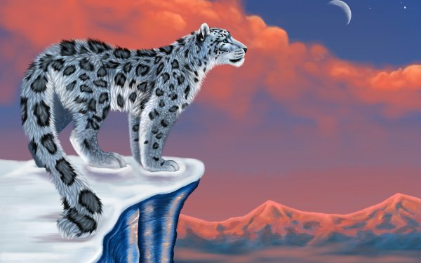 Animal Artistic Snow Leopard HD Wallpaper   Background Image
