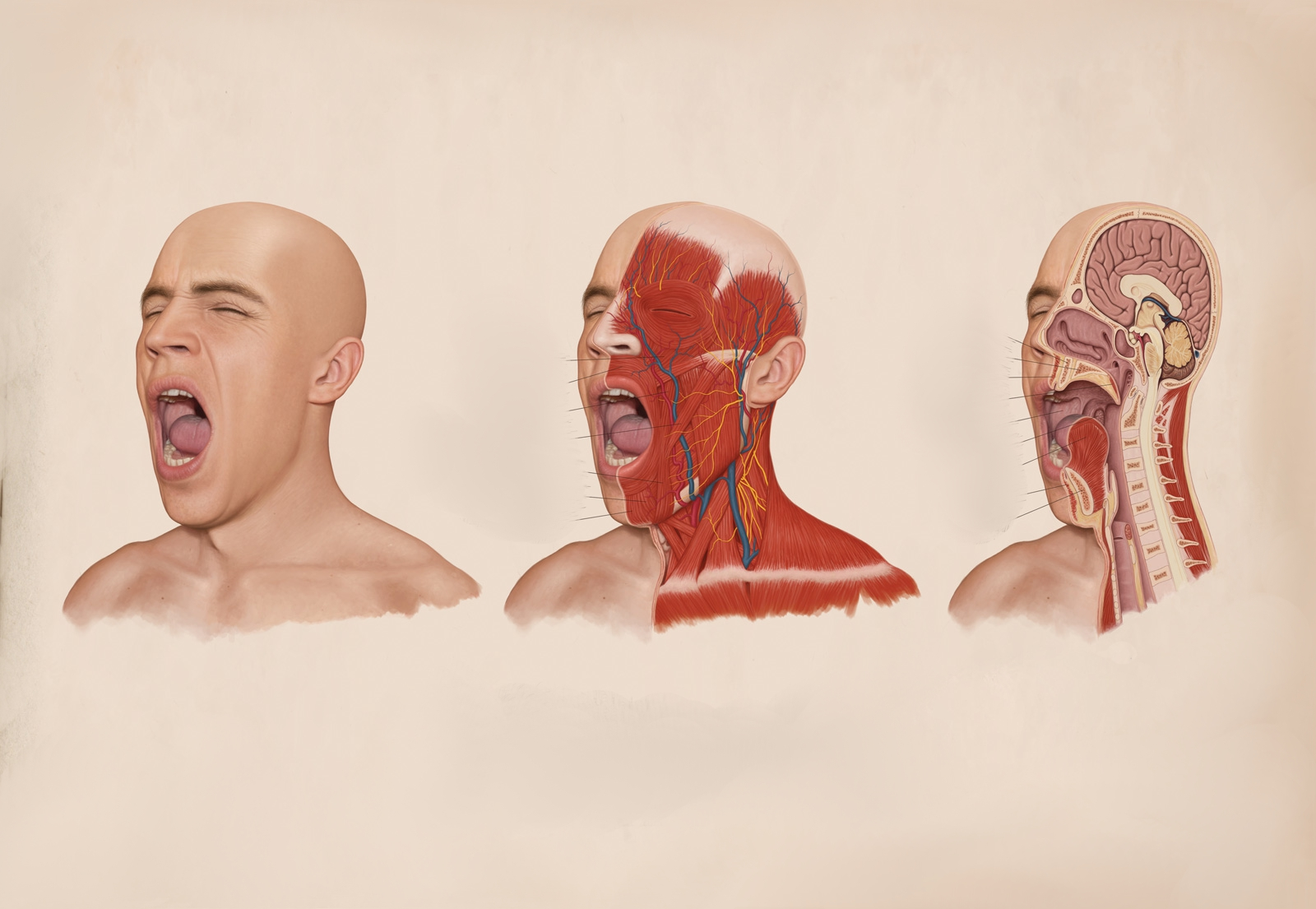 Anatomy Wallpaper and Background Image | 1600x1105 | ID ...