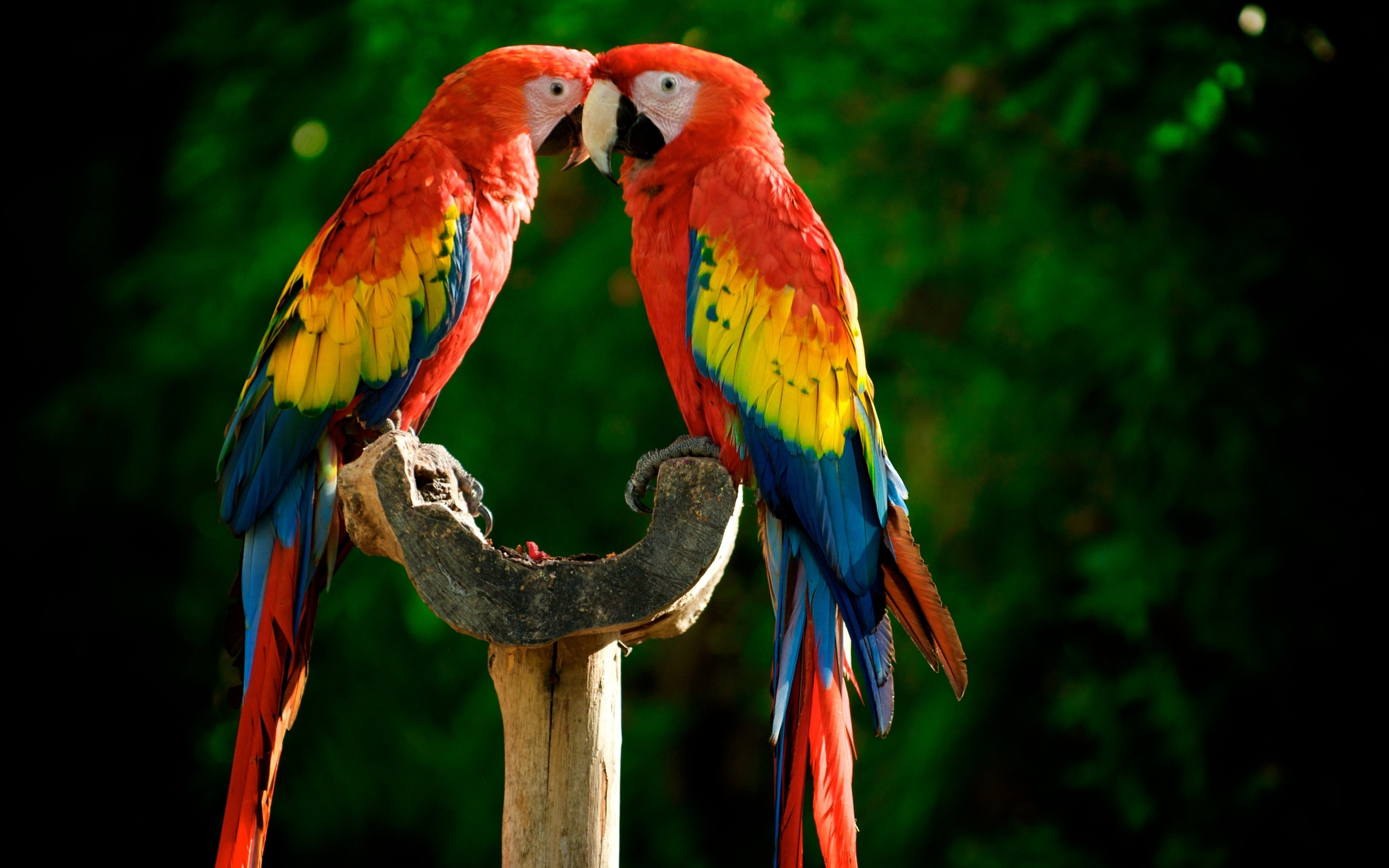 Great Green Macaw Wallpaper Parrots Animals Wallpapers HD