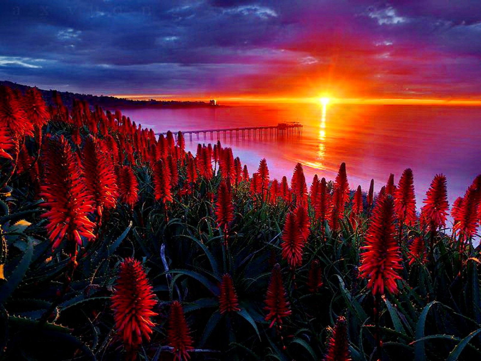 Earth - Flower  Red Flower Bridge Sun Water Wallpaper