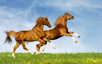 Animal - Horse Wallpapers and Backgrounds ID : 246153