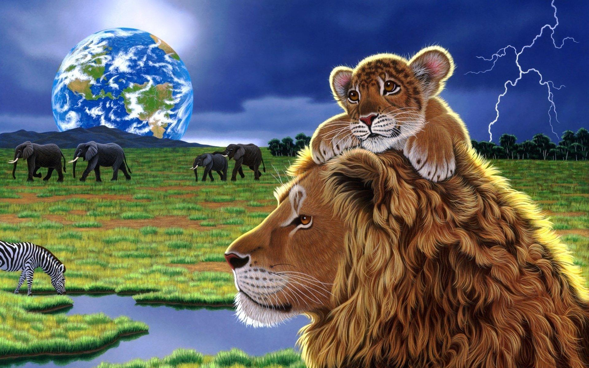 Animal - Lion  Africa Wallpaper