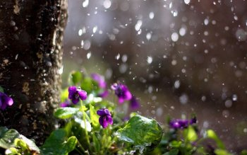 Fotografie - Rain Wallpapers and Backgrounds ID : 255591