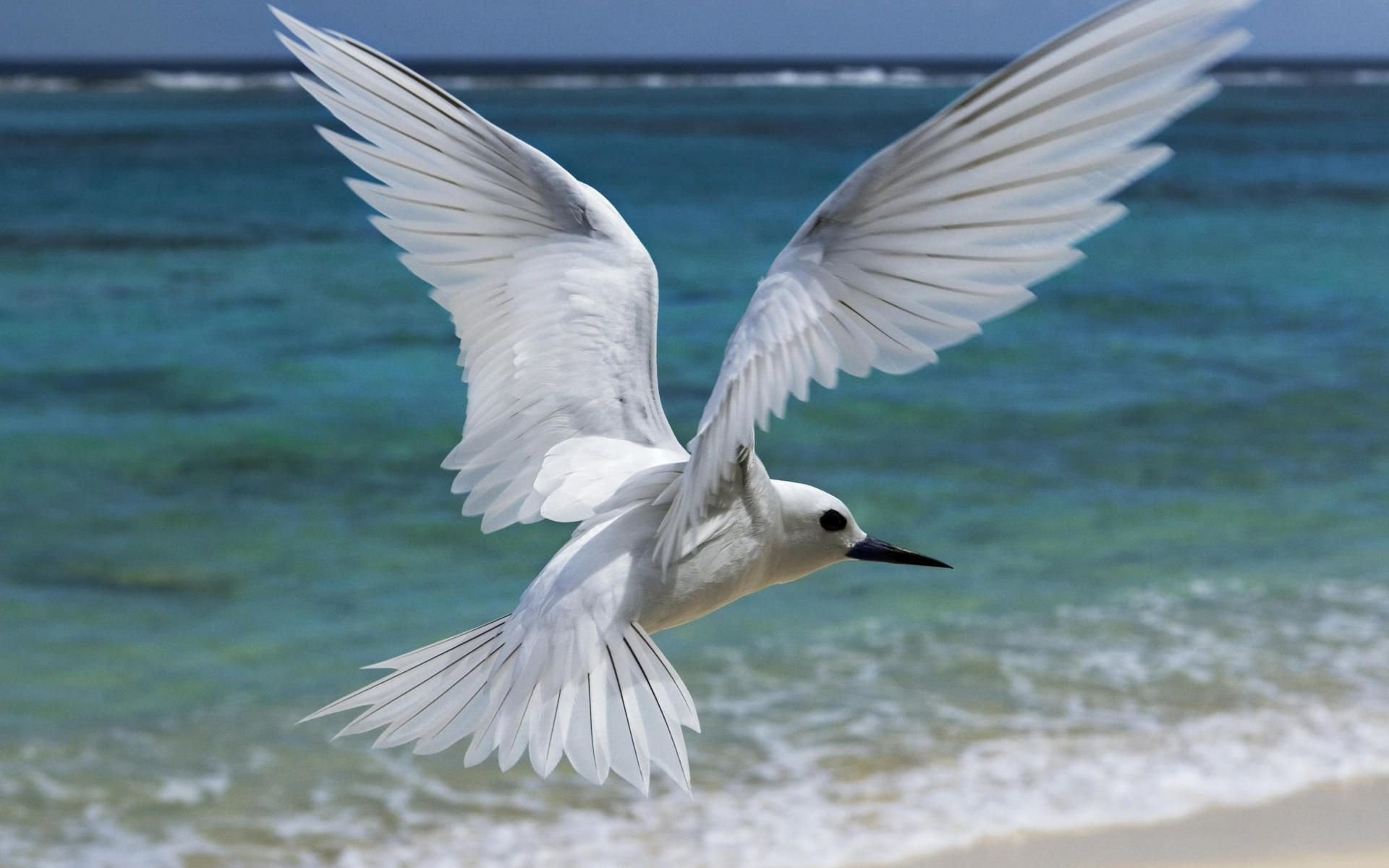 Animal - Seagull  Bird Animal Flying Wallpaper