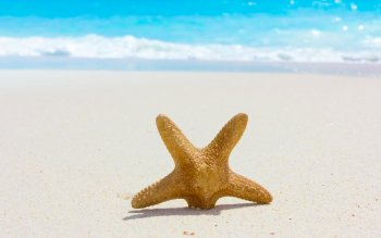 Animal - Starfish Wallpapers and Backgrounds ID : 260631