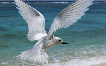 Animal - Seagull Wallpapers and Backgrounds ID : 260833