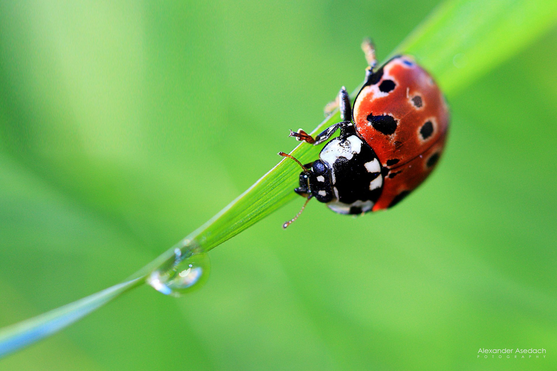 insects ladybirds desktop wallpapers - photo #24