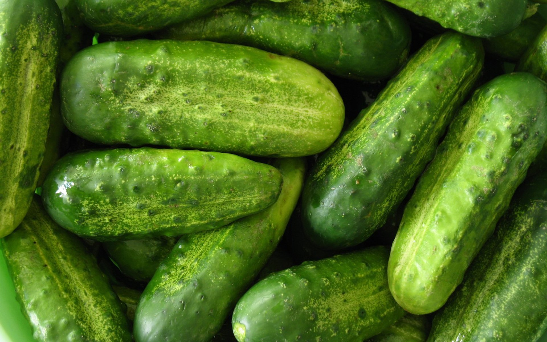 Cucumber HD Wallpaper | Background Image | 1920x1200 - Wallpaper Abyss