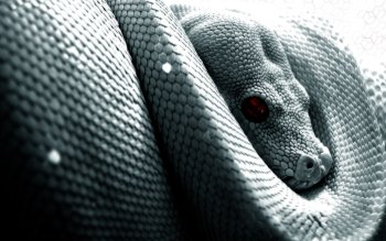 Animal - Snake Wallpapers and Backgrounds ID : 26823