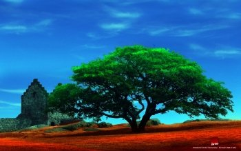 Earth - Tree Wallpapers and Backgrounds ID : 26903