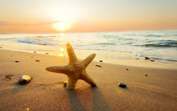 Animal - Starfish Wallpapers and Backgrounds ID : 270353