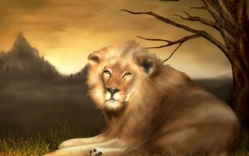 Animal - Lion Wallpapers and Backgrounds ID : 271103