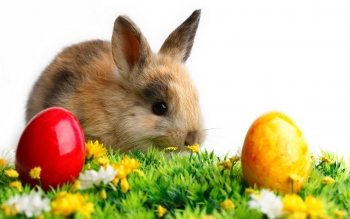 Holiday - Easter Wallpapers and Backgrounds ID : 271733