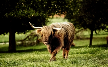 Animal - Buffalo Wallpapers and Backgrounds ID : 272163