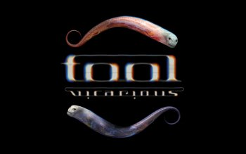 Musik - Tool Wallpapers and Backgrounds ID : 27253