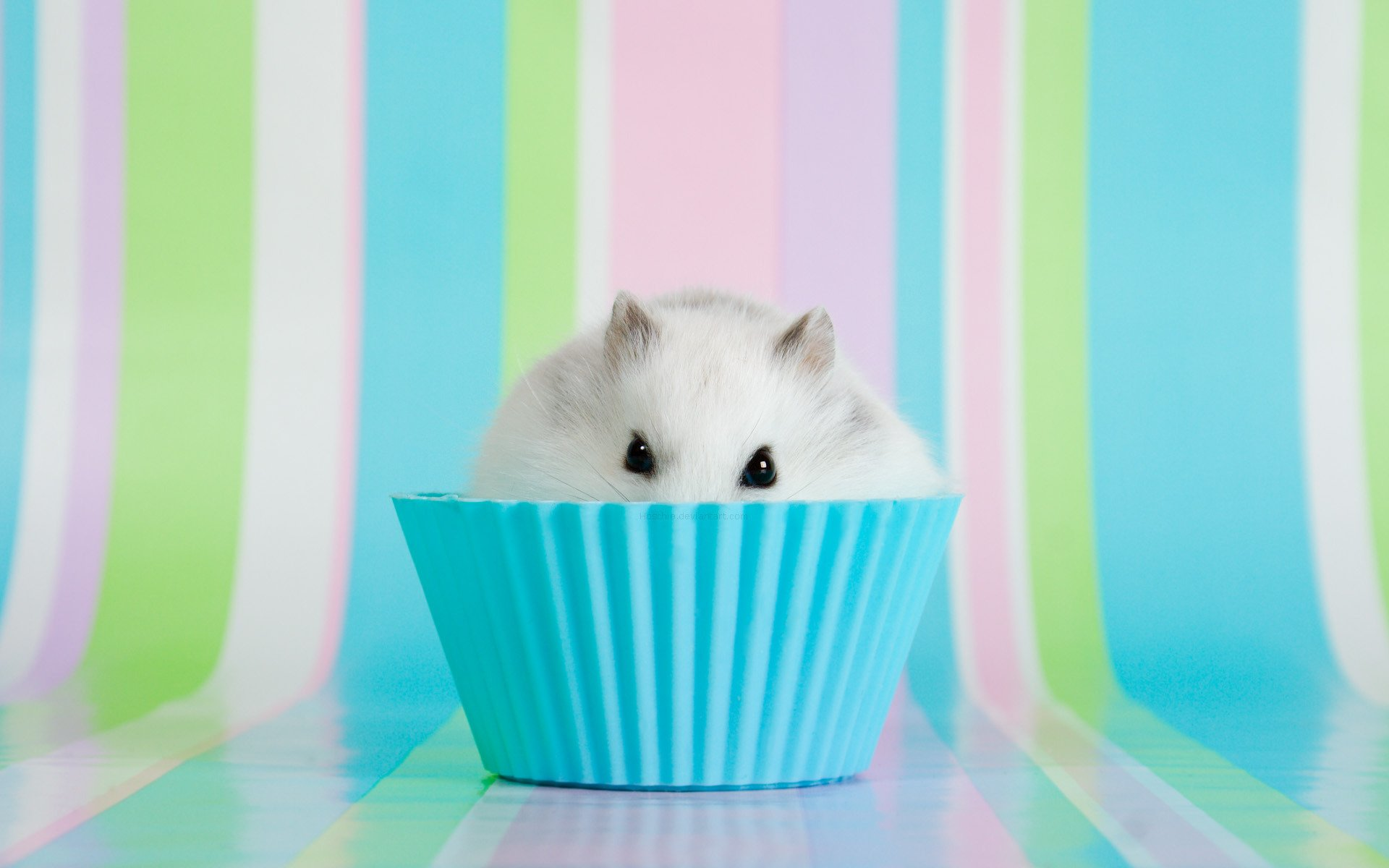 hamster full hd fond d 39 cran and arri re plan 1920x1200 id 276113. Black Bedroom Furniture Sets. Home Design Ideas