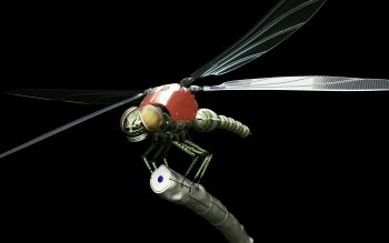 Animal - Dragonfly Wallpapers and Backgrounds ID : 276171
