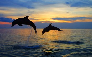 Tier - Delfin Wallpapers and Backgrounds ID : 277061
