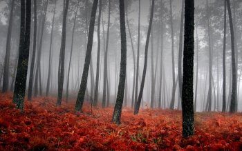 Terra - Foresta Wallpapers and Backgrounds ID : 278591