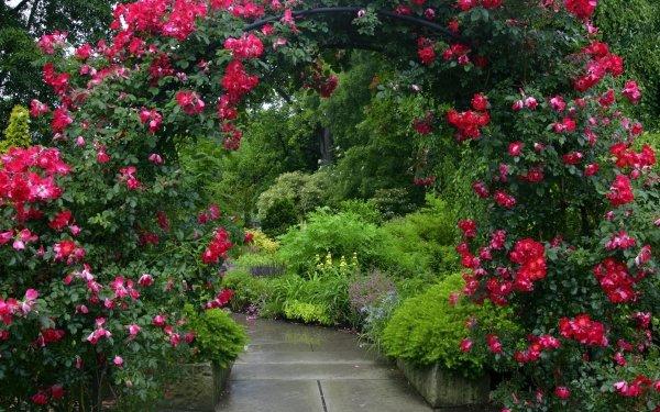 Розы плетистые в дизайне сада 6