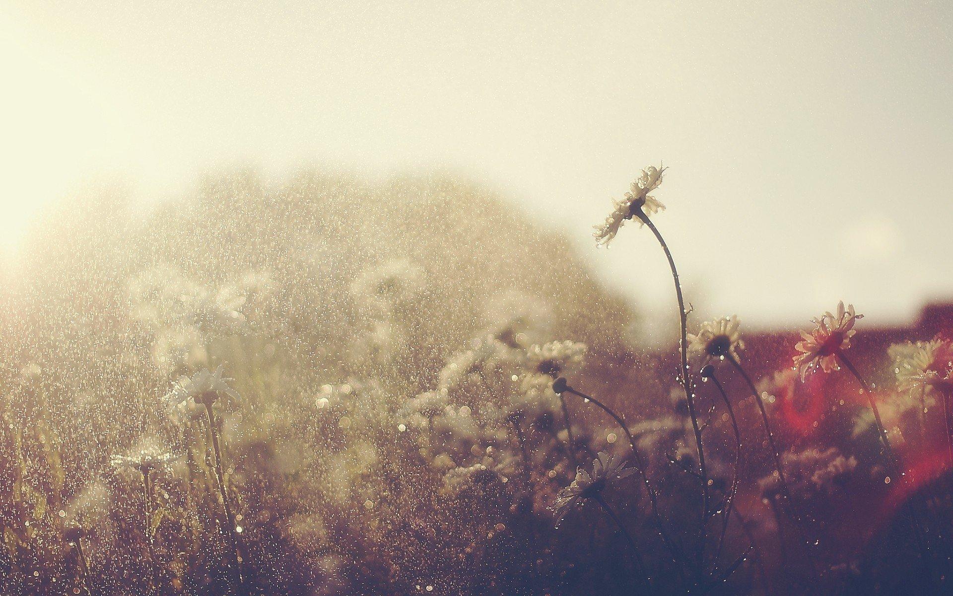 Rain full hd wallpaper and background image 1920x1200 id283853 photography rain flower wallpaper altavistaventures Gallery