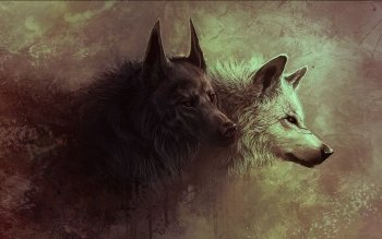 Djur - Wolf Wallpapers and Backgrounds ID : 284763