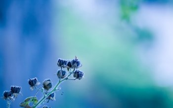 HD Wallpaper | Background Image ID:286643