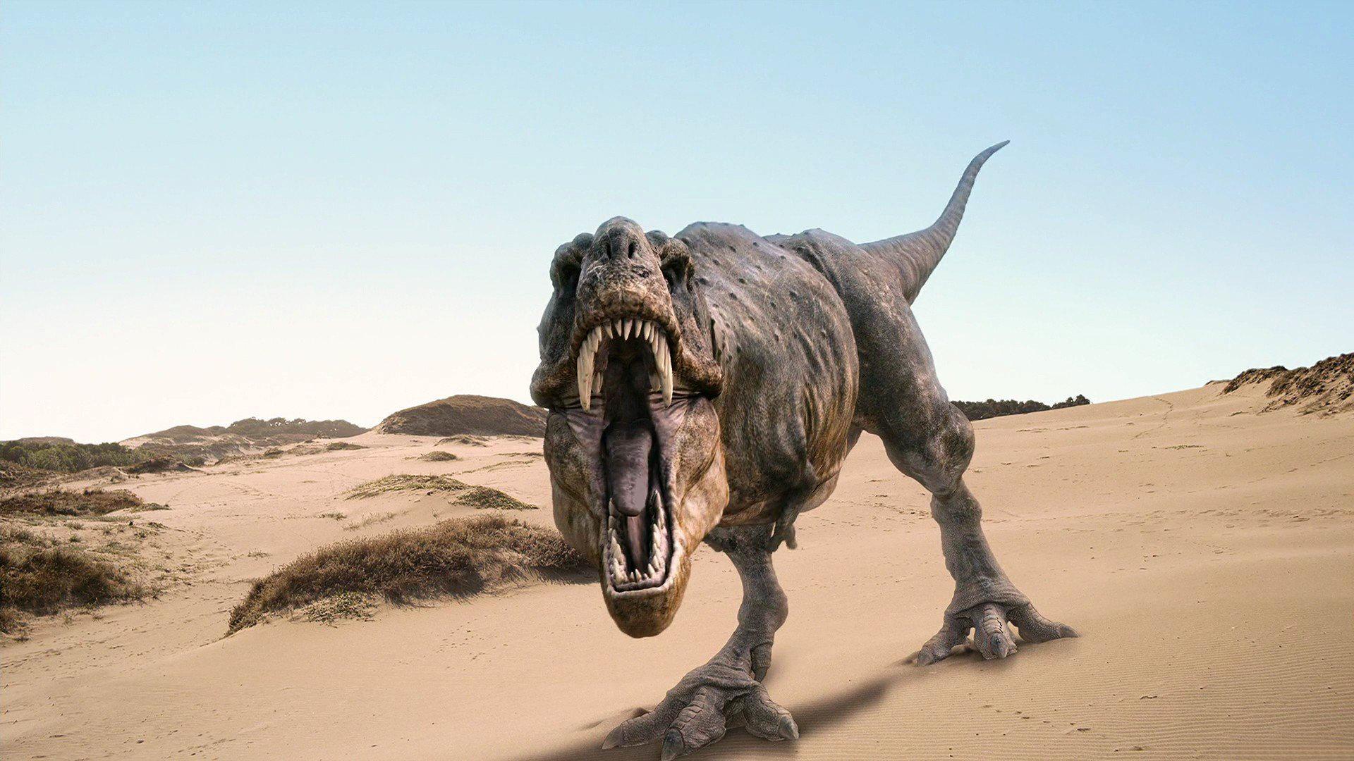 Tyrannosaurus Rex Full HD Wallpaper and Background ...