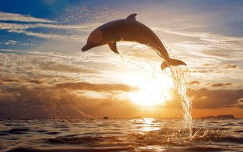 Animal - Dolphin Wallpapers and Backgrounds ID : 289211