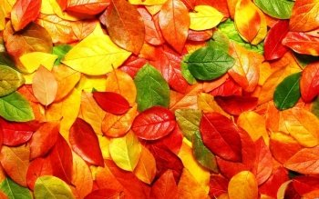 Earth - Autumn Wallpapers and Backgrounds ID : 290801
