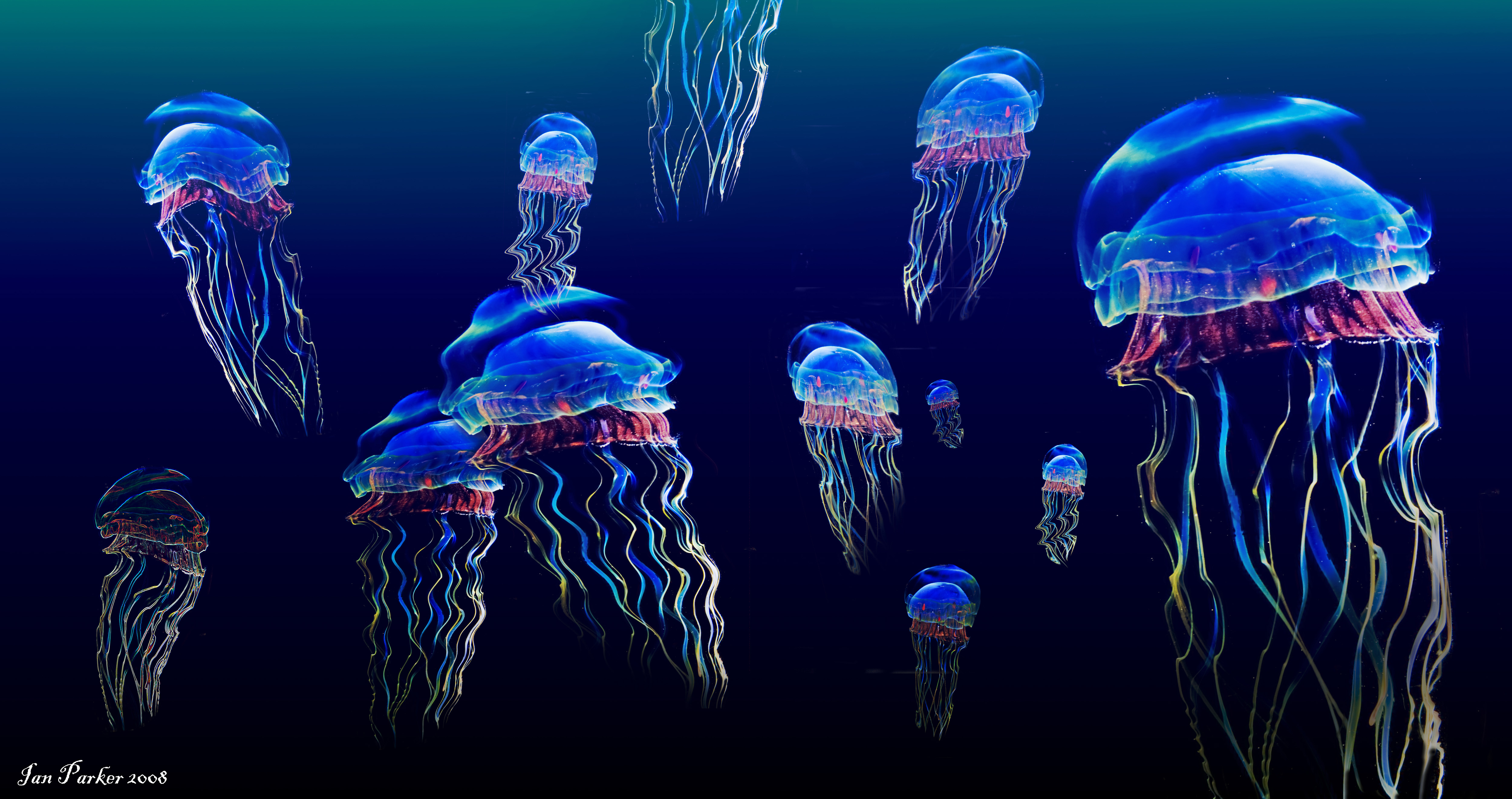 Jellyfish 4k Ultra HD Wallpaper | Background Image | 5000x2641 | ID:292393 - Wallpaper Abyss